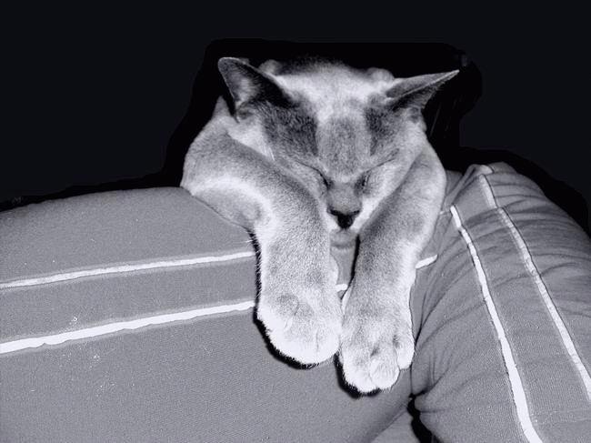 Звери спят :) №2 (38 фото)