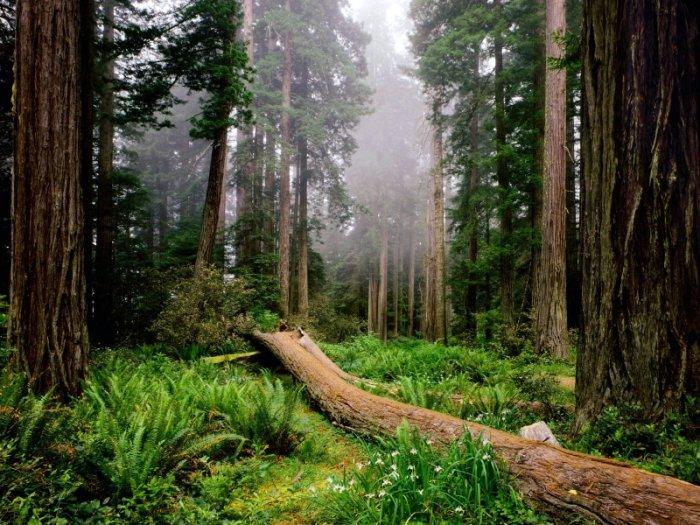 Красивые фото природы (23фото)