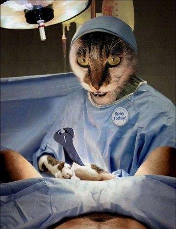 Жизнь кошек :) (12фоток)