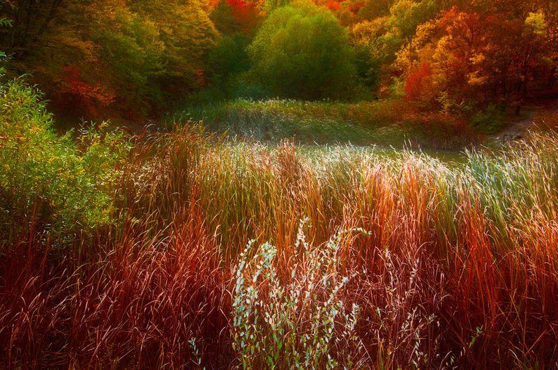 красивые фотографии. природа.  Метки. природа в фотографиях.