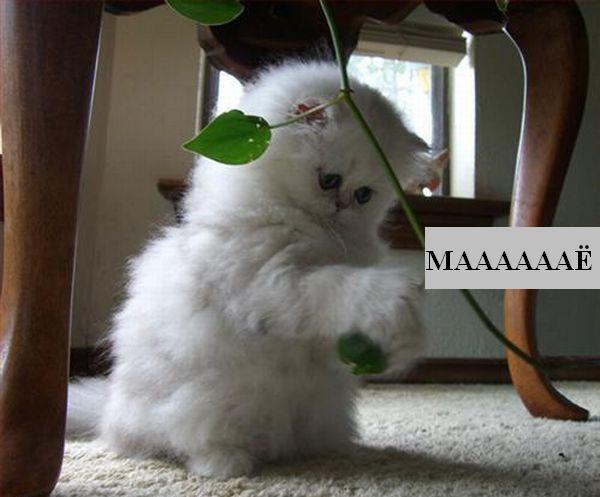 Классные фотографии котов (27 фото).
