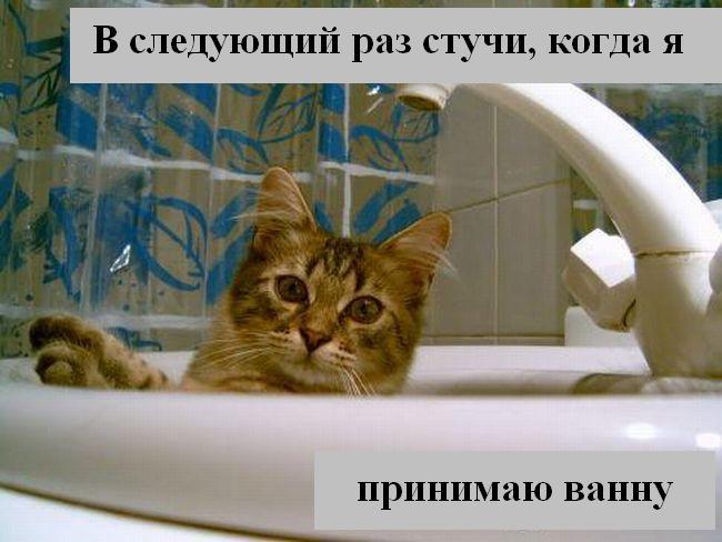 Процитировано. в цитатник. кошки фото приколы. котоматрицы.  23 раз.