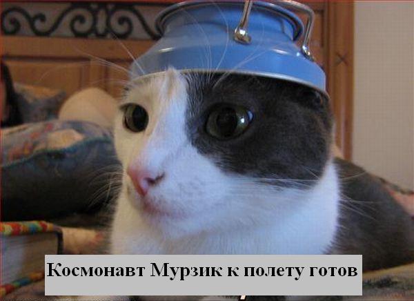 Процитировано. в цитатник. кошки фото приколы. котоматрицы.  Сохранили.