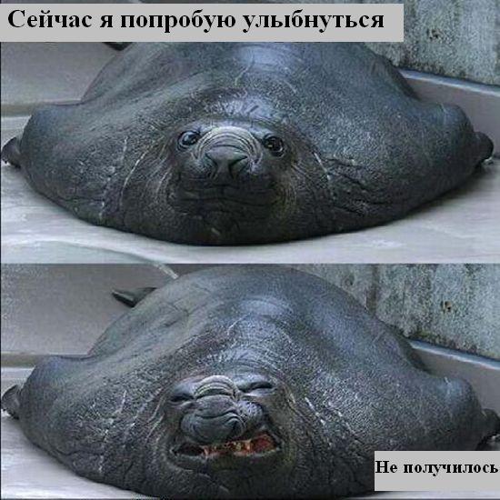 Забавные фото наших питомцев! Radionetplus_ru_misli213