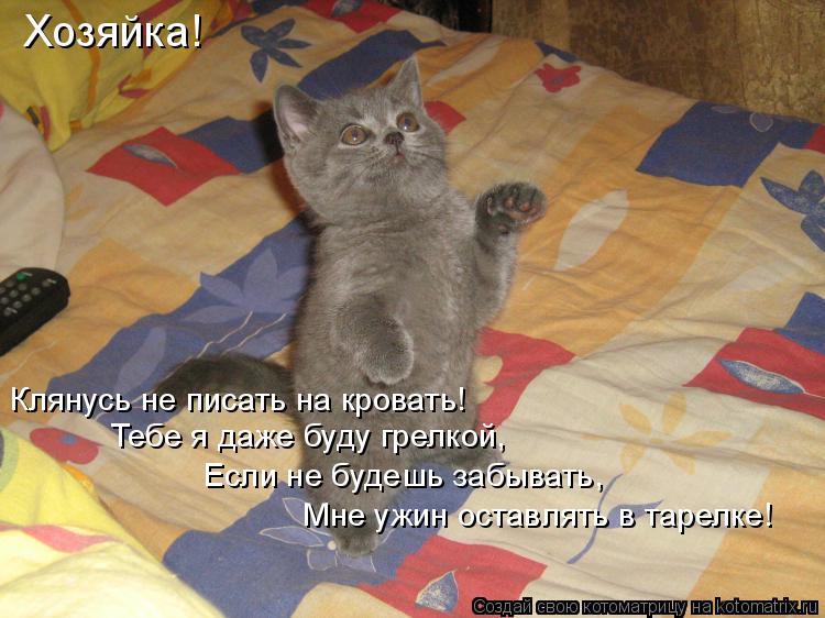Стих по кота и хозяйку смешной